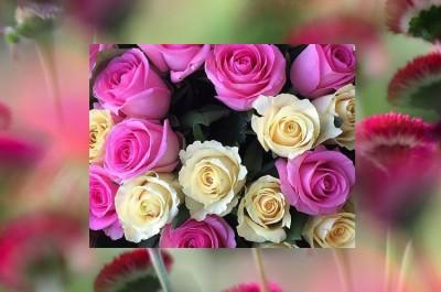 """""""Arlentium"""" lilled. Sooduskupongi."""